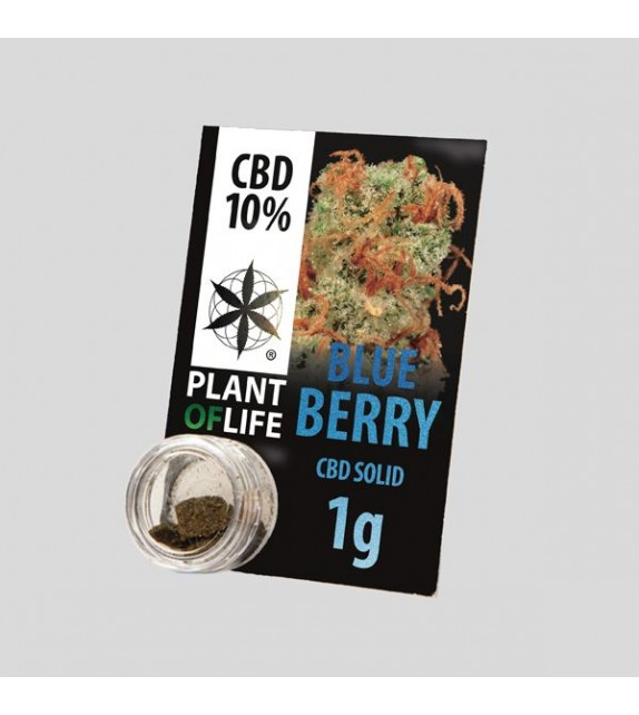 Plant of Life - Blueberry