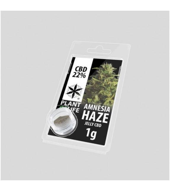 Plant of Life - Amnesia Haze - Jelly CBD