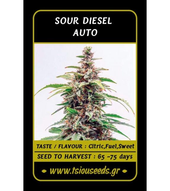 Tsiou Seeds - Sour Diesel Auto