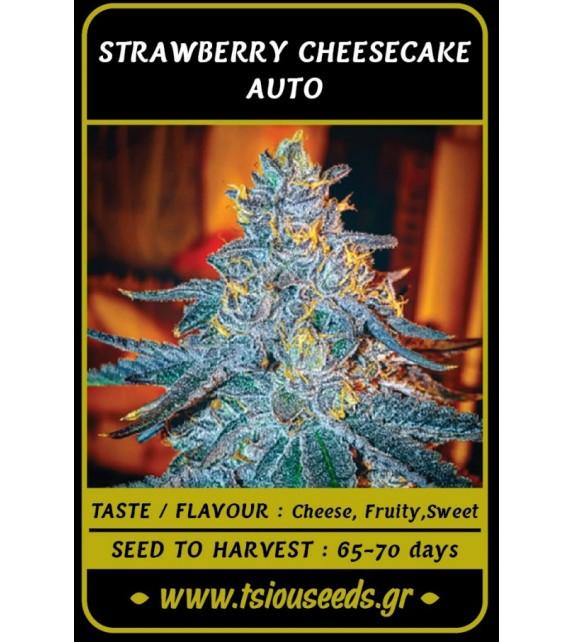 Tsiou Seeds - Strawberry Cheesecake Auto