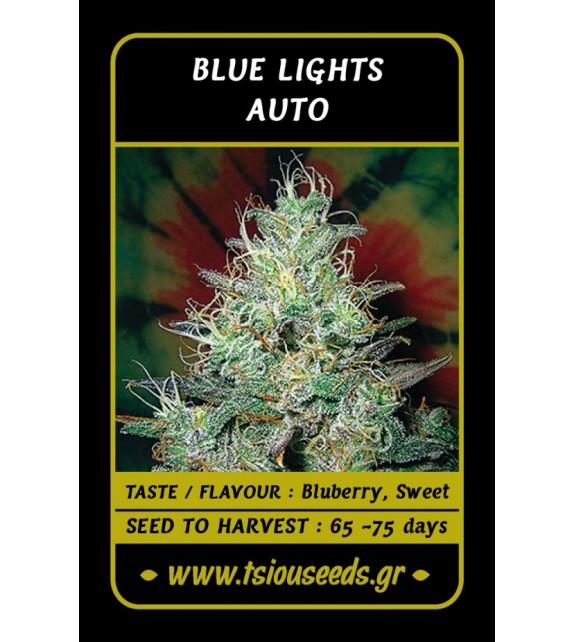 Tsiou Seeds - Blue Lights Auto