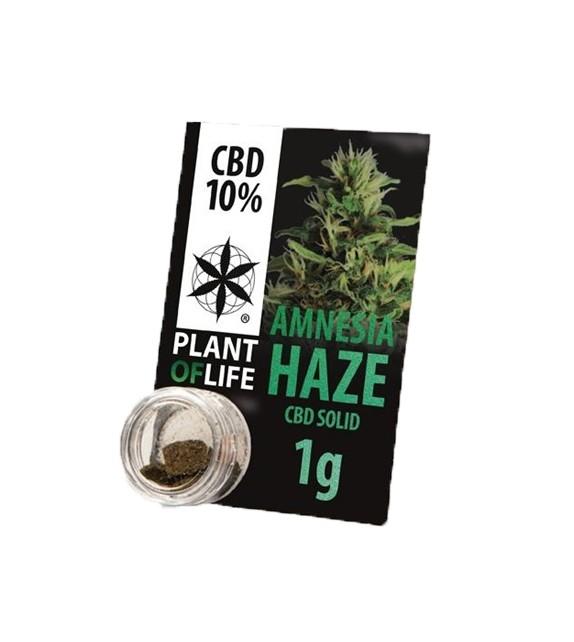 Plant Of Life - Amnesia Haze