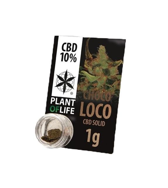 Plant Of Life - Chokoloko