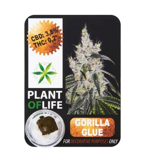 Plant Of Life - Gorilla Glue