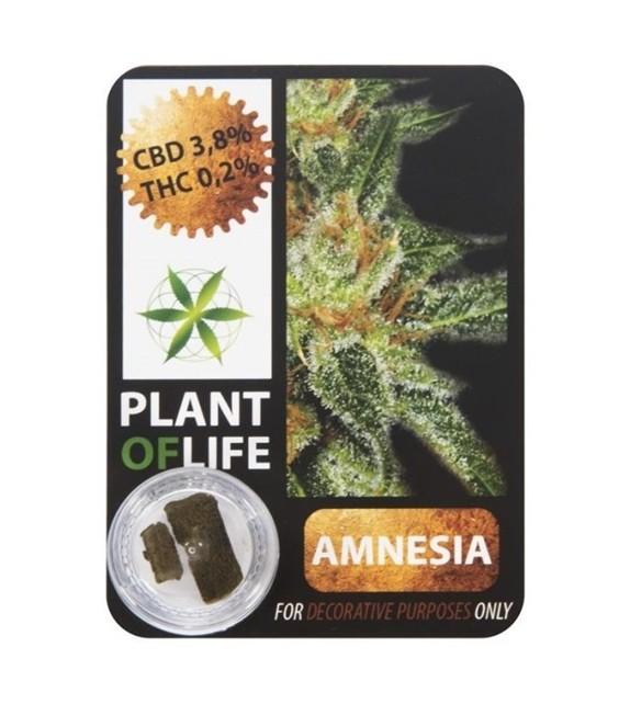 Plant Of Life - Amnesia Haze 3,8%