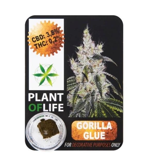 Plant Of Life - Chokoloko 3,8%